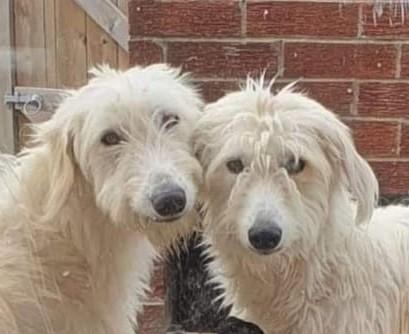 Buddy and Rufus